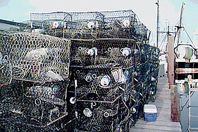 Commercial crab traps