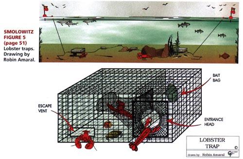diagram of a lobster pot